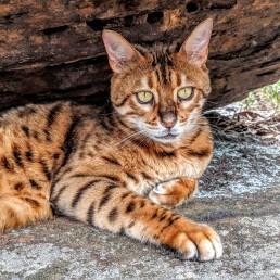 Adventure Catsultant - Lynx profile