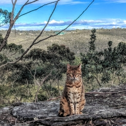 Adventure Catsultant - Lynx pose