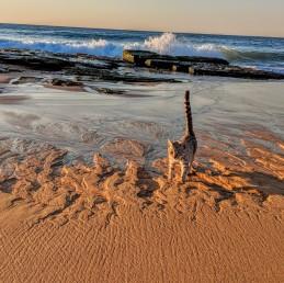 Adventure Catsultant - Alfie sand art