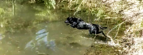 Adventure Catsultant - Scarlett Jumping into water